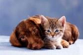 Уникальная зоогостиница Kot-Begemot Hotel – лучший вариант для котов всех пород