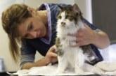 Что делать, если кошка не хочет стричь когти?