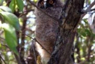 Какая птица протяжно кричит по ночам и не даёт спать?