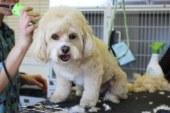 Груминг — стрижка собак и кошек