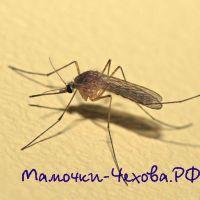 Что делать при укусах насекомых?