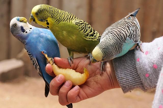 Как выбрать попугая для ребенка
