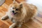 Как постричь когти собаке