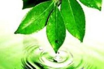 Рубрика «Экология нашего городка»