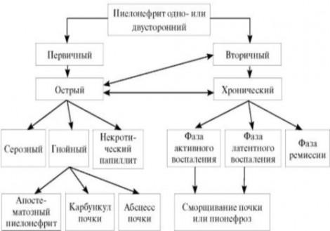 Классификация пиелонефрита