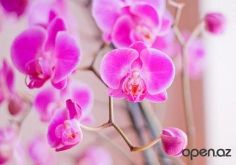 Поселили на подоконнике орхидею?