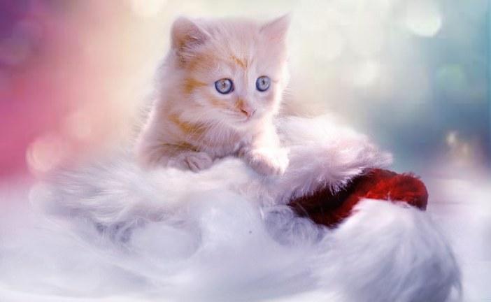 Как обеспечить здоровое питание котенку?