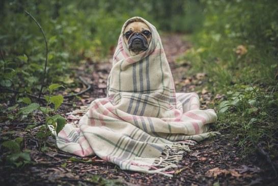 Ухаживаем за домашними питомцами в весенний период