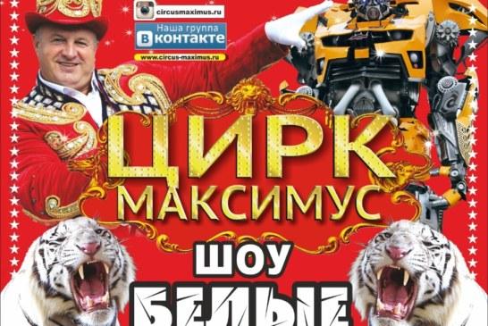 Цирк Максимус в Чехове — шоу «Белые тигры»